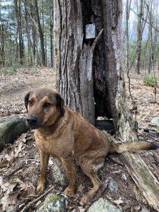 Eliot's canine, Noah